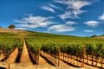 Zaštita vinograda i voćnjaka od korova