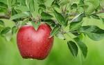 Zaštita jezgričavih i koštičavih voćaka do cvatnje