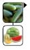 krastavca lubenice dinje