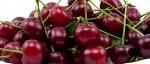Palež cvijeta i sušenje grančica koštičavog voća – Monilia laxa