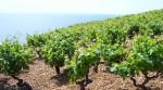 Preporuka za zaštitu vinove loze – 2017