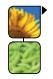 soja suncokret