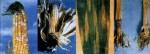 FUZARIOZE KUKURUZA (Fusarium spp.)