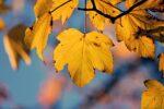 Održavanje i zaštita voćaka u jesen