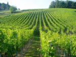 Preporuka vinogradarima!