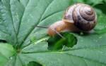 PUŽEVI (Gastropoda)