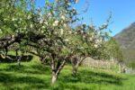 Zimsko prskanje voćnjaka, maslina i vinove loze