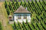 Zaštitite vinograd od plamenjače i pepelnice