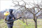 Zimsko prskanje ključno je za zaštitu voćaka i vinove loze