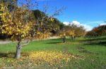 Jesenska priprema i zaštita vočaka, vinove loze i masline